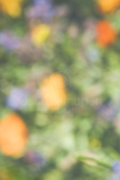 Abstract Flowers XIII (Orange And Yellow)