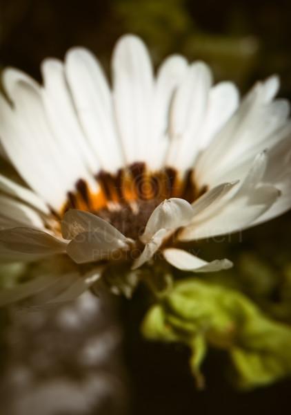 Lovely Warm Flower