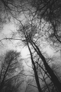 Bog XI (Trees)