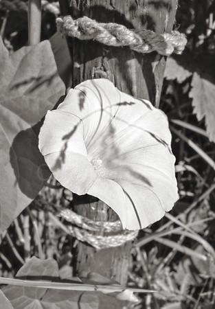 Paper Like Flower