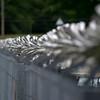CSCC Oulton Park 25 June 11  0004