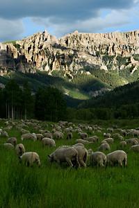 Fine Pasture