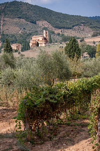 San't Antimo vineyard