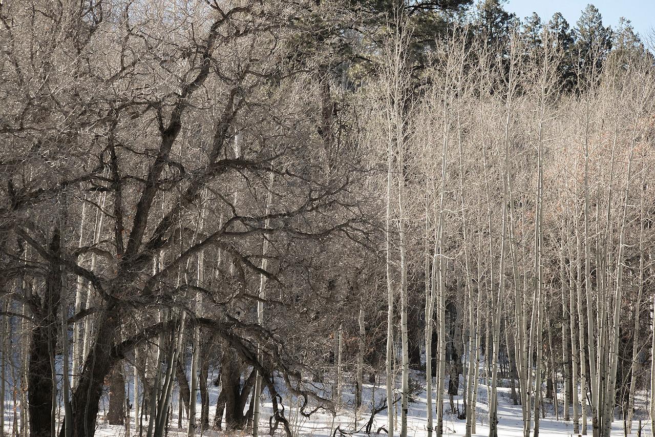 'Winter Contrasts'