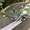 Vines grow into windshield wiper of a car