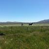 South Creek Ranch - Live Auction - 3