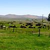 South Creek Ranch - Live Auction - 17