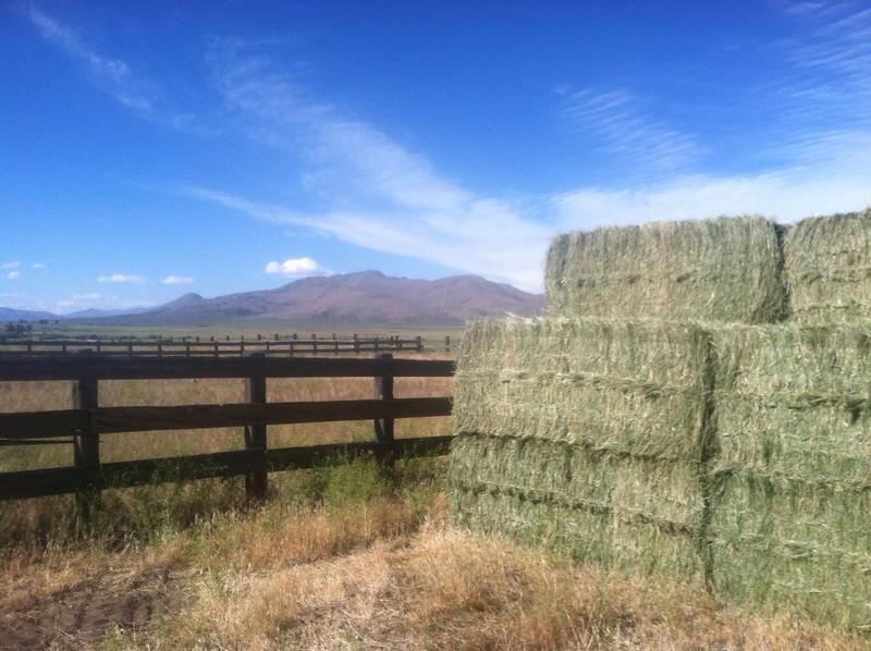 South Creek Ranch - Live Auction - 4