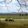 South Creek Ranch - Live Auction - 18