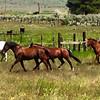 South Creek Ranch - Live Auction - 19