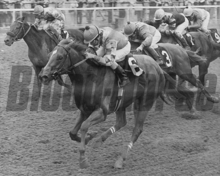 What's Dat with Eddie Maple up beating Pappa Riccio and Cast Party in the 1982 Cowdin Stakes.<br /> Photo by Bob Coglianese