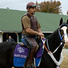 Happy Ticket<br /> Breeders' Cup horses work at Churchill on Oct. 31, 2006.<br /> 1BC10_31  image7<br /> Photo by Anne M. Eberhardt