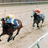 Is It True wins the 1988 Breeders' Cup Juvenile.<br /> Anne M. Eberhardt Photo.