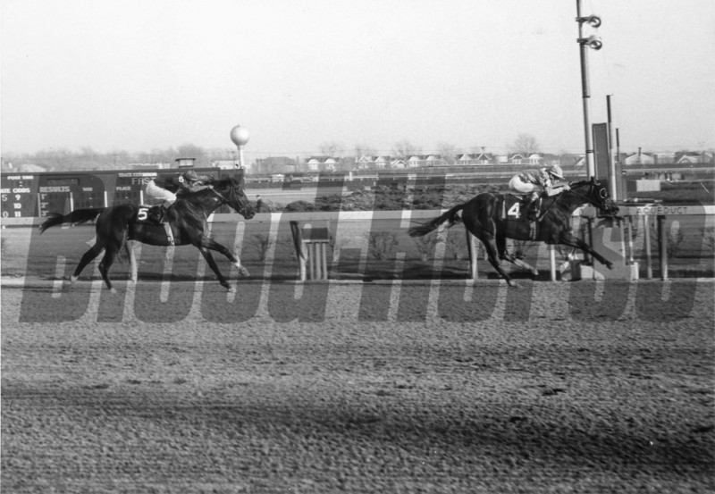 Northern Dancer wins the Remsen at Aqueduct on November 27, 1963<br /> Coglianese Photos