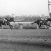 Northern Dancer wins the Remsen at Aqueduct on November 27, 1963<br /> Coglianese Photos