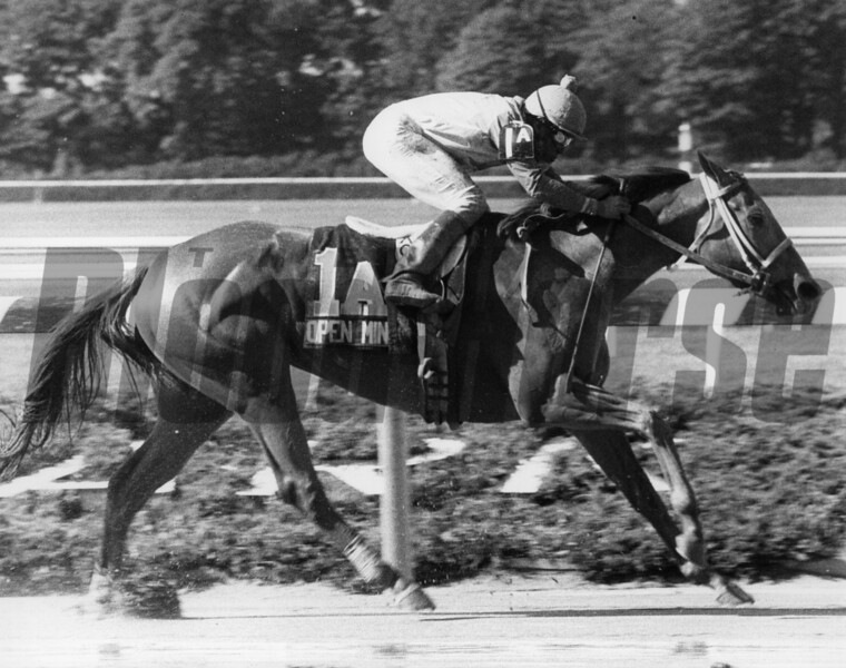 Open Mind wins the Acorn Stakes at Belmont Park. <br /> Photo by: Bob Coglianese