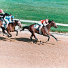 Alysheba winning the 1987 Kentucky Derby