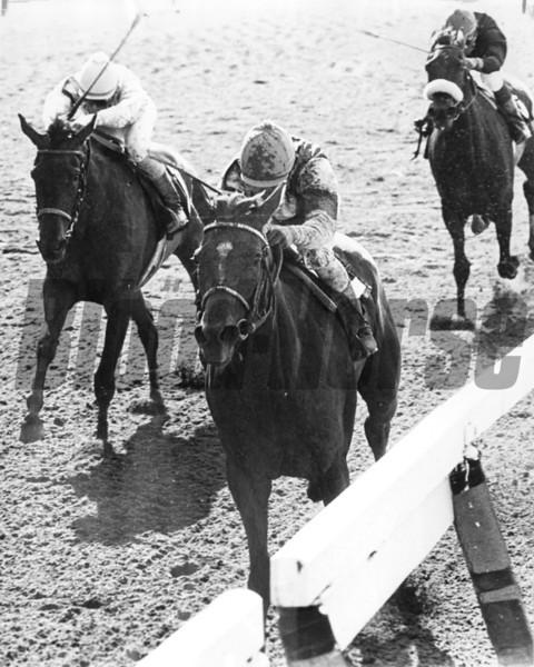 Wayward Lass and jockey Jorge Valasquez wins the 1981 Coaching Club American Oaks.<br /> Photo by: Bob Coglianese