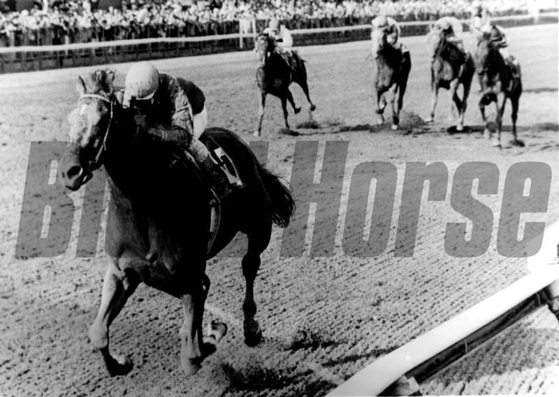 Alydar won the 1978 Whitney Handicap at Saratoga with Jorge Velasquez up. Bob Coglianese.