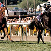 Last Tycoon wins the 1986 Breeders' Cup Mile<br /> Skip Dickstein Photo