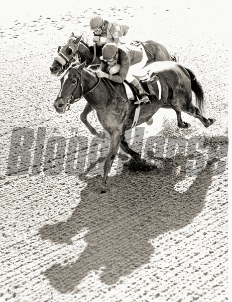 Ta Wee wins the 1970 Fall Highweight at Belmont Park.<br /> Photo by: Bob Coglianese/NYRA