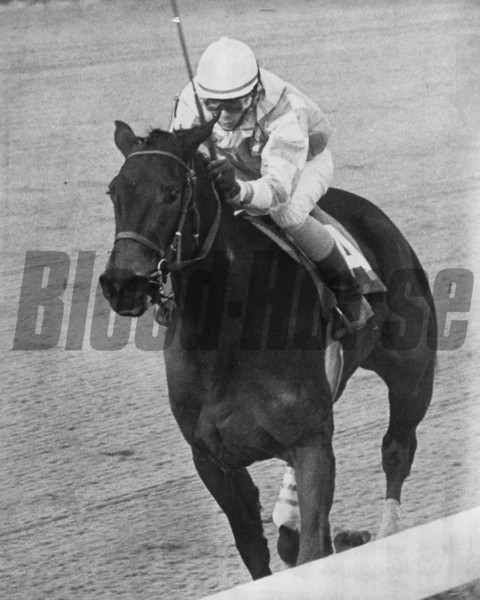 Wayward Lass and jockey Cash Asmussen wins the 1981 Busanda.<br /> Photo by: Bob Coglianese