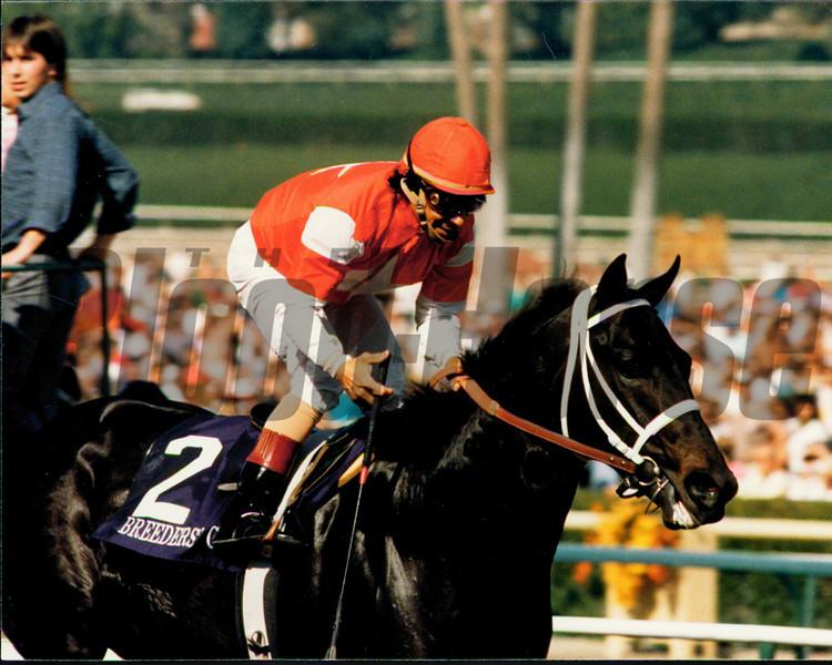 Batch 24: HORSES