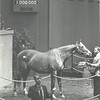 Hip 353 Lady Graustark at the 1982 Keeneland January Sale<br /> Photo by: Milt Toby