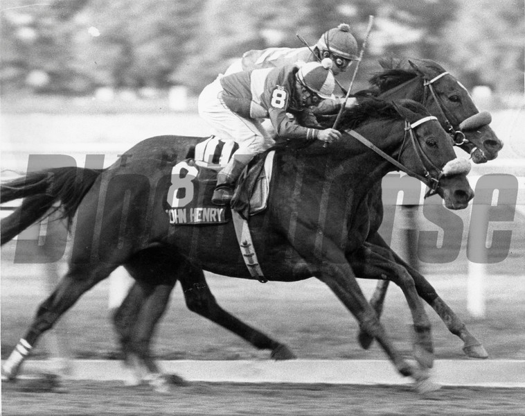 John Henry wins the Jockey Club Gold Cup at Belmont Park on October 10, 1981.<br /> Photo by: Bob Coglianese