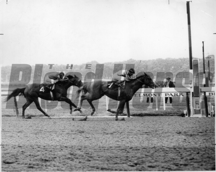 Stage Door Johnny winning the 1968 Belmont Stakes<br /> NYRA Photo