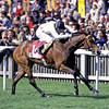 Sleepytime<br /> Sir Henry Cecil<br /> Trevor Jones Photo