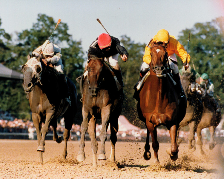 Forty Niner; Travers Stakes; Saratoga, 1988<br /> Skip Dickstein Photo