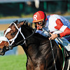 Stephanies Kitten, John Velazquez up, wins the Breeders Cup Juvenile FIllies Turf Churchill Downs , Lousiville, KY 11/4/11, photo by Mathea Kelley