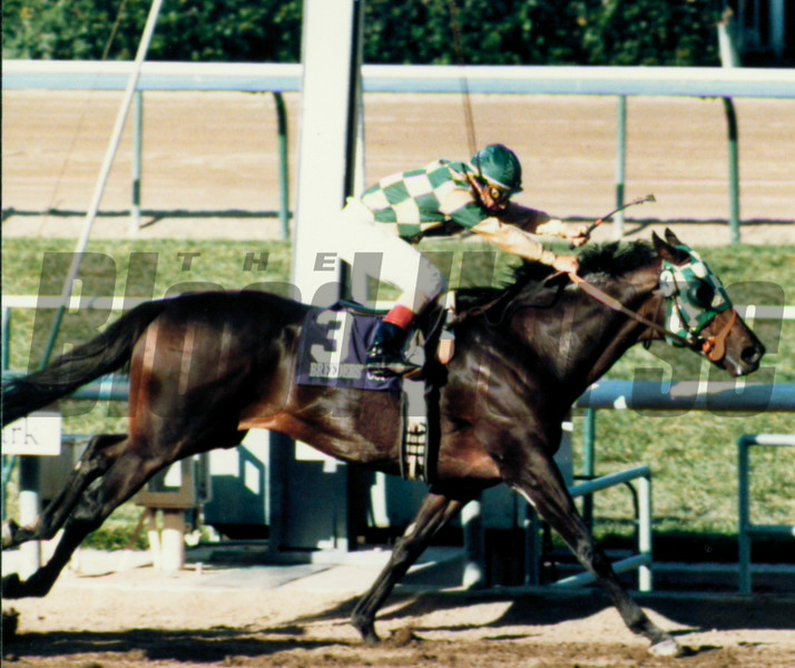 Skywalker wins the 1986 Breeders' Cup Classic.<br /> Anne M. Eberhardt Photo