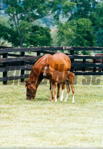 Genuine Risk and foal Genuine Reward in 1993<br /> Photo by: Anne M. Eberhardt