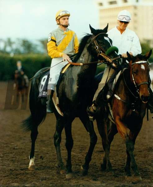 Sunday Silence prior to winning the 1989 Breeders' Cup Classic.<br /> Photo by: Anne M. Eberhardt