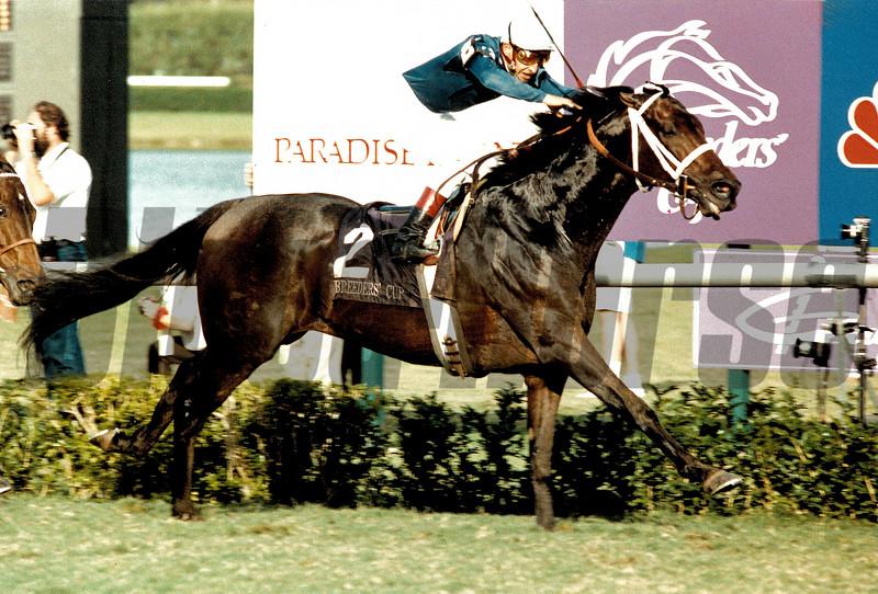 Steinlen wins the 1989 Breeders' Cup Mile at Gulfstream Park<br /> Skip Dickstein Photo