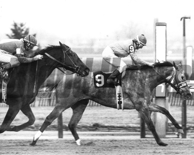 Whodam with Chris Antley up beating Landing Plot in the 1989 King's Point Handicap<br /> Photo by Bob Coglianese