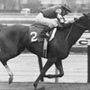 Genuine Risk 4-year old debut, 9 1/2 length allowance win at Aqueduct on April 11, 1981.<br /> Bob Coglianese Photo