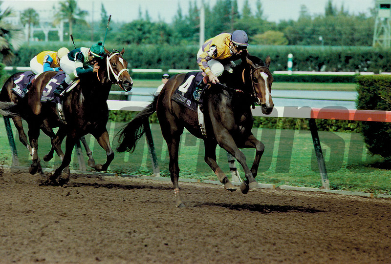 Go for Wand wins the 1989 Breeders' Cup Juvenile Fillies<br /> Skip Dickstein