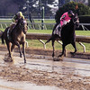 CAPTION: Josh's Madelyn (#5) outside wins the Raven Run (gr. II) at Keeneland on Oct. 15, 2004. Vision of Beauty finished second. This was the first graded stakes win for jockey Justin shepherd.<br /> Origs1 image 5<br /> Photo by Anne M. Eberhardt