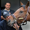 Jockey Calvin Borel gives Mine That Bird a little smooch in the barn area of Churchill Downs in Louisville, Kentucky the day after winning the 135th running of the Kentucky Derby  May 3, 2009.