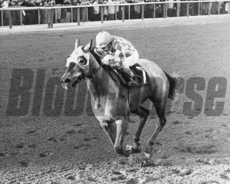 Batch 19: HORSES