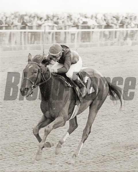 Personal Ensign wins the Grade I Beldame at Belmont Park<br /> Photo by: Bob Coglianese