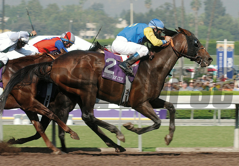 Pleasantly Perfect wins the 2003 Breeders' Cup Classic.<br /> Dave Harmon Photo