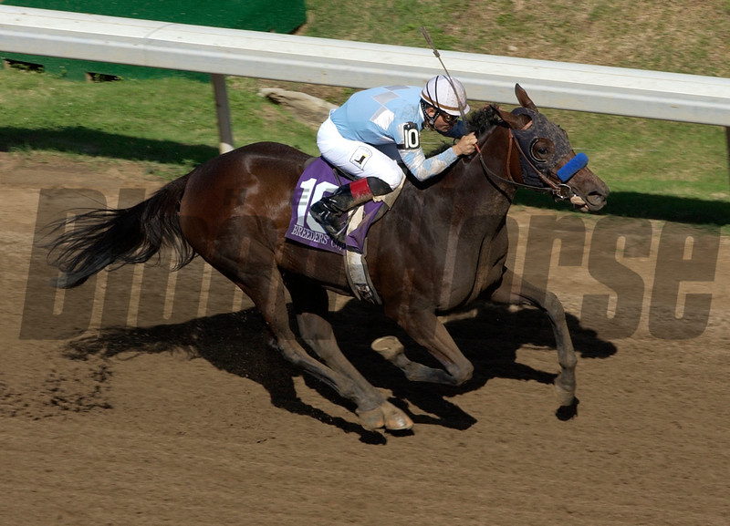 Sweet Catomine is all alone winning the 2004 Breeders Cup Juvenile Fillies at Lone Star Park<br /> Rick Samuels Photo