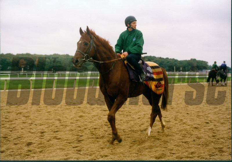 Ibn Bey prepping for the 1990 Breeders' Cup Classic.<br /> Photo by Anne M. Eberhardt