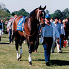 Blumin Affair; Arkansas Drrby,Grade 2, Oaklawn Park,4/23/1994<br /> Anne M. Eberhardt Photo