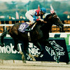 Cigar wins the 1995 Breeders' Cup Classic.<br /> Skip Dickstein Photo