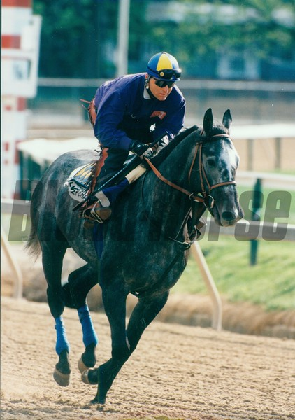 Silver Charm training at Pimlico before the Preakness Stakes<br /> Photo by: SKip Dickstein